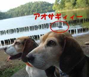 20080920_099_22_5