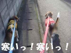 20081119_004_1