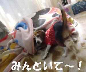 20081119_014_1