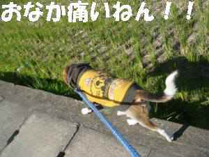 20081120_002_1