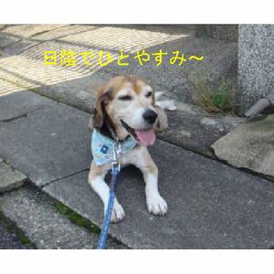 Photo_3