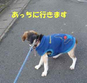 20100116_013_15