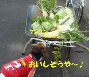 20100118_026_18