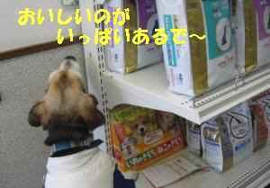 20100119_004_12