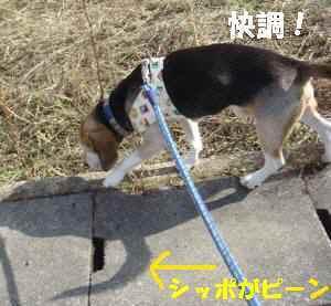20100129_004_15