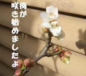 20100205_011_13