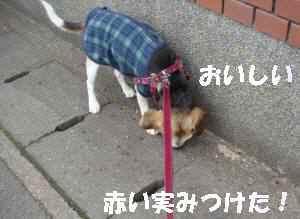 20100208_008_16