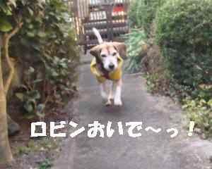 20100219_030_15