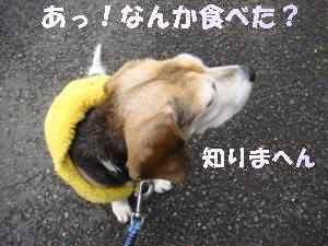 20100302_011_14