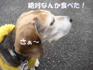 20100302_013_15