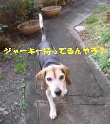 20100305_017_17