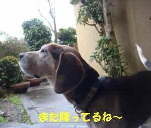 20100306_002_12
