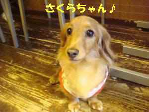 20100307_036_17_2