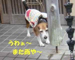 20100309_003_12