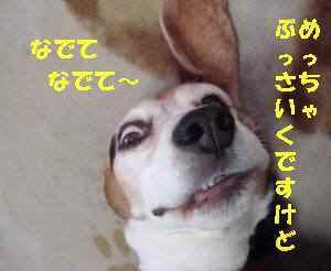 20100310_008_15
