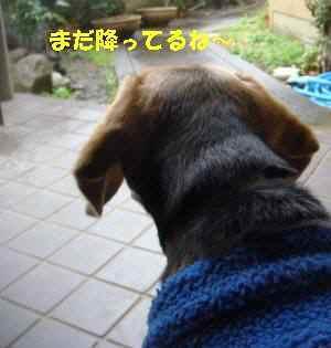 20100310_012_17