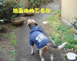 20100311_001_11