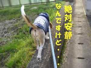 20100312_014_18