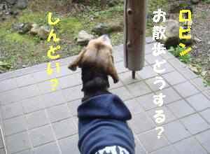 20100313_001_11