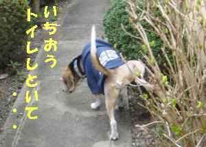 20100313_003_12