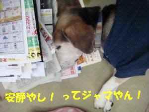 20100313_004_14