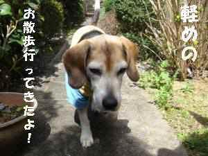 20100314_007_12