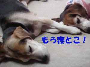 20100315_009_12