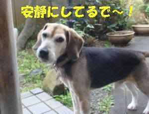 20100316_005_12