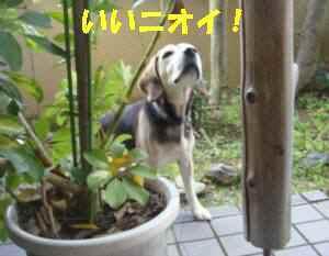 20100316_006_13