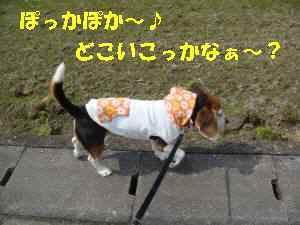 20100318_005_11