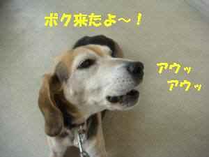 20100319_010_13