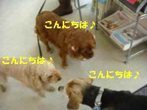 20100319_014_16