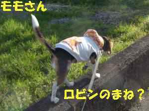 20100319_020_17