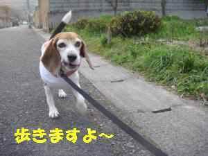 20100320_006_15