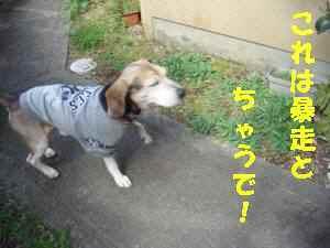 20100321_010_14