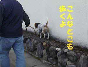 20100321_038_17