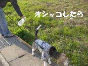 20100321_040_19
