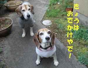 20100322_011_11