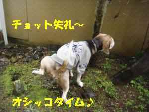 20100324_002_12