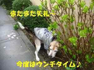 20100324_003_13