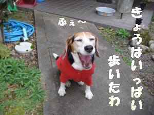 20100327_034_17
