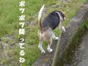 20100329_007_12