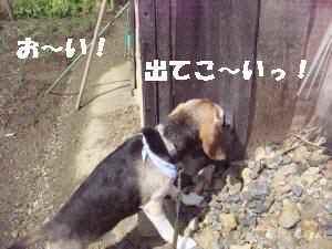20100329_012_15