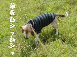 20100330_013_13