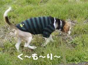 20100331_006_11