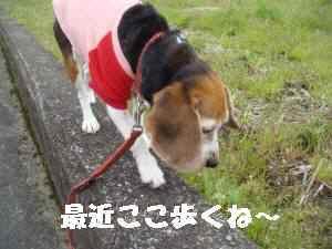 20100331_009_12