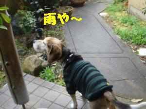20100401_002_11