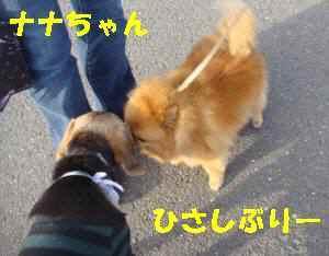 20100402_019_16