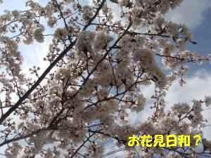 20100403_005_11