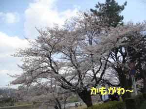 20100403_033_19